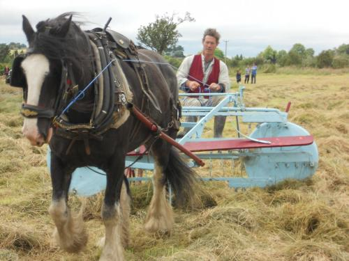 Plough recording for Boom Library's Medieval life
